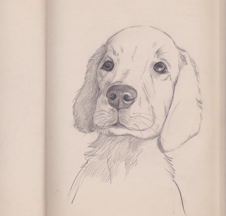 小狗黑白手绘简图