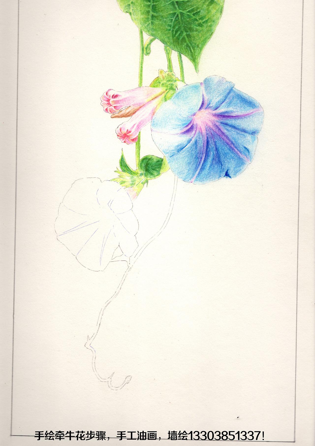 手绘牵牛花步骤|纯艺术|彩铅|简一 - 原创作品 - 站酷