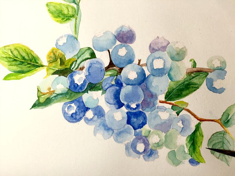 蓝莓卡通图片大全大图