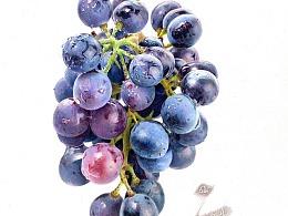 彩铅画——葡萄