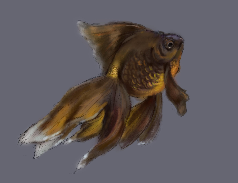 手绘-金鱼