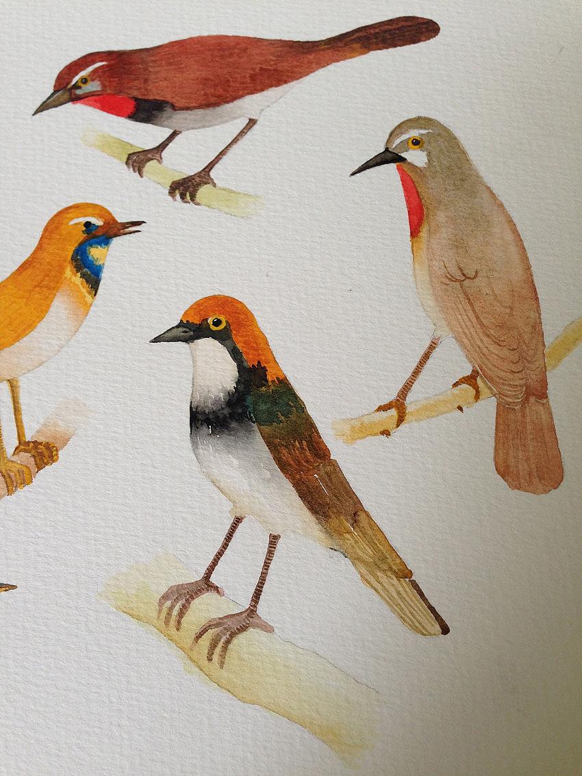 水彩手绘-鸟(步骤图)