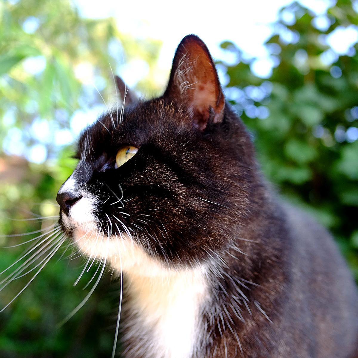 农展馆公园里的小猫|摄影|动物|think - 原创作品