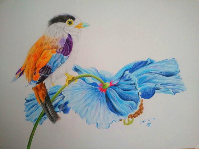 彩铅 花鸟