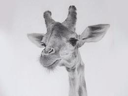 《长颈鹿先生1》