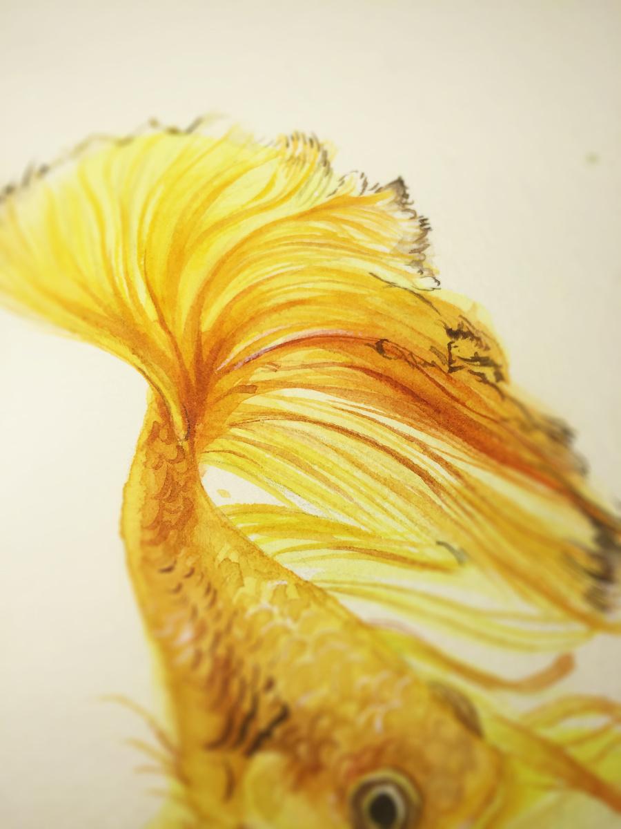 水彩手绘-鱼