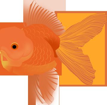 手绘—金鱼