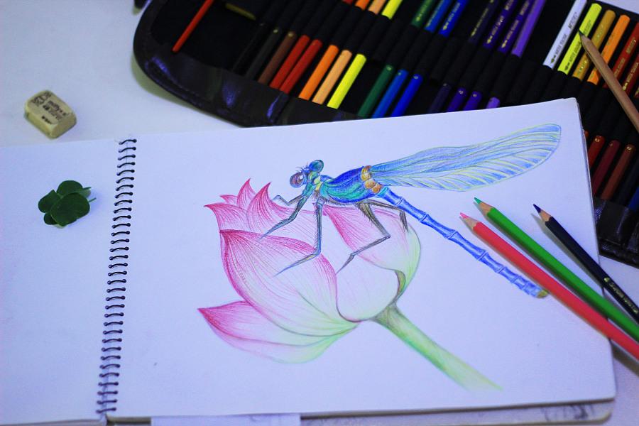 彩色铅笔手绘荷花