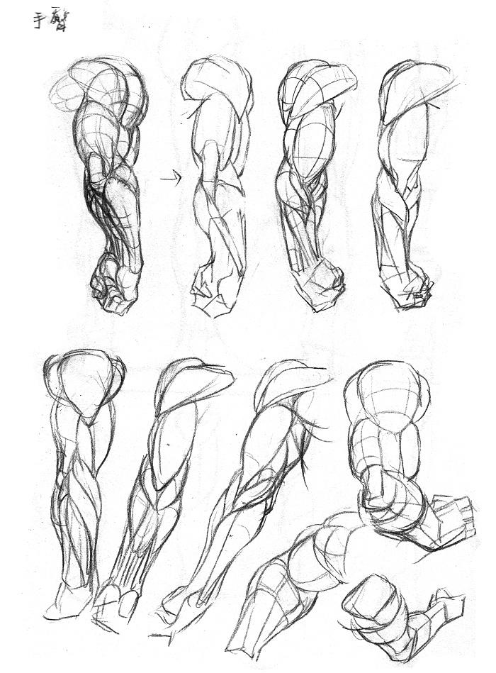 手臂结构图片大全