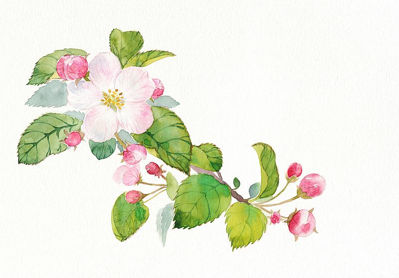 手绘花卉系列——《花草志Ⅲ》