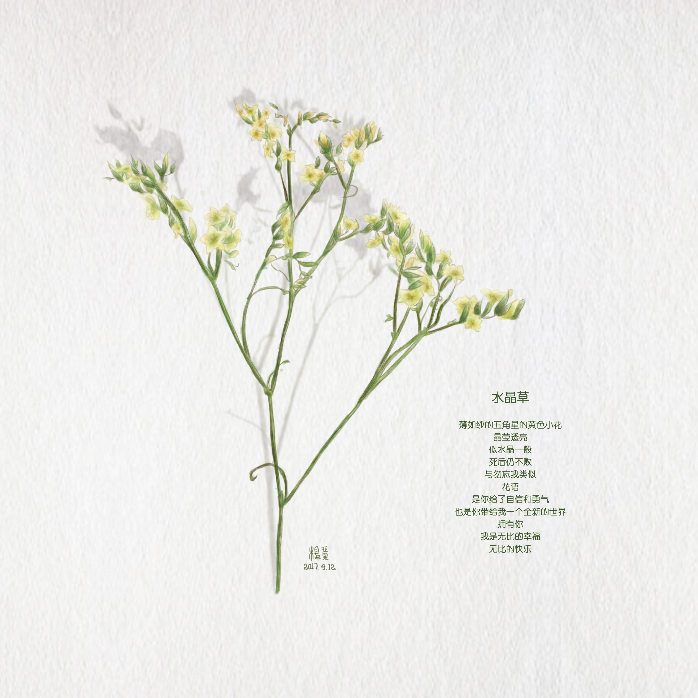每日一涂 手绘水彩花卉 水晶草