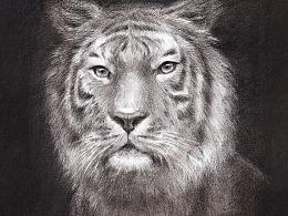 素描——老虎