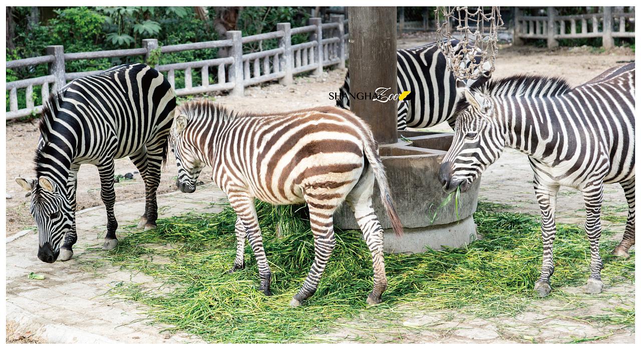 动物园儿一日游