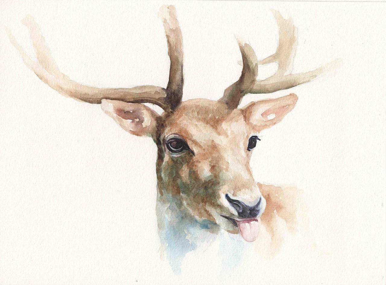 壁纸 动物 鹿 1280_945