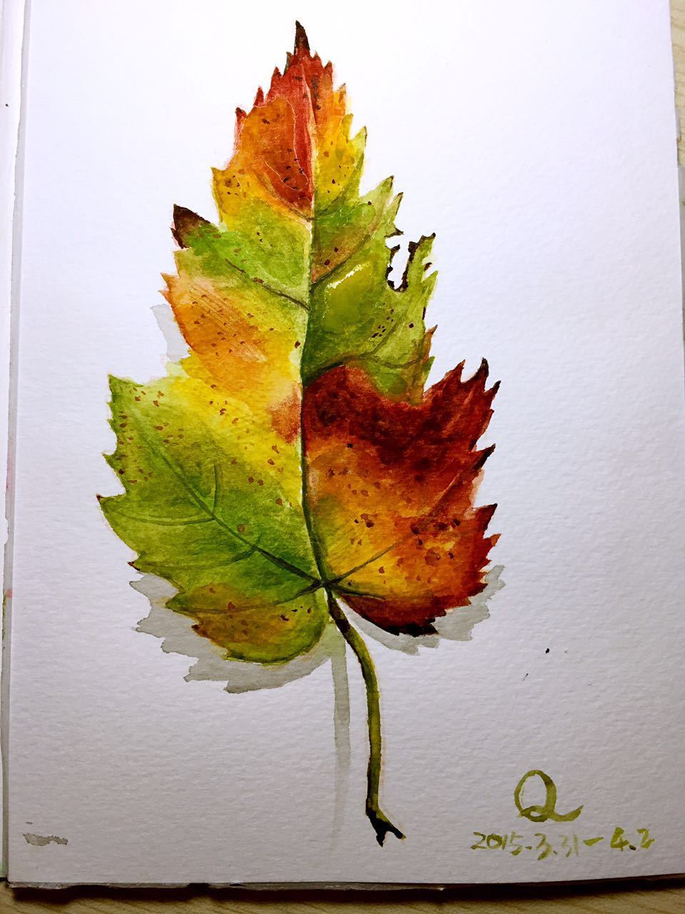 水彩 树叶图片