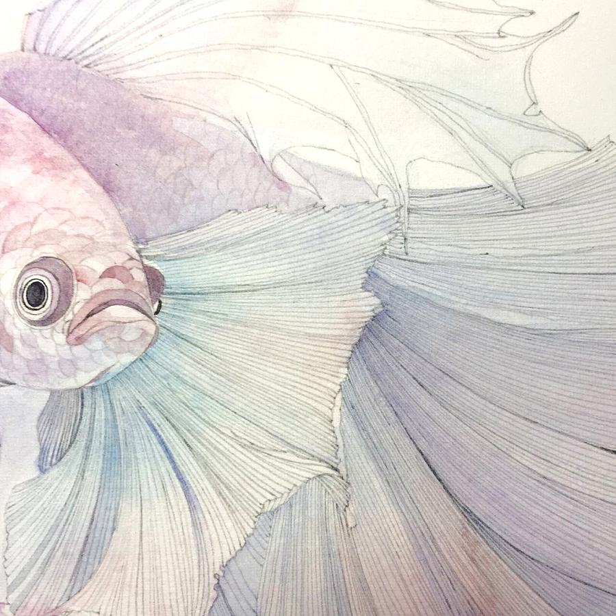 手绘斗鱼|绘画习作|插画|王火火大师 - 原创设计