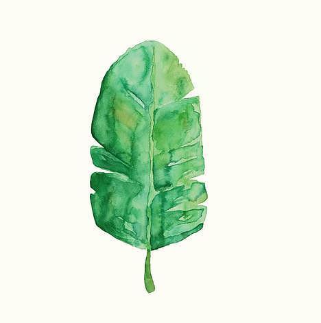 手绘水彩 小清新植物