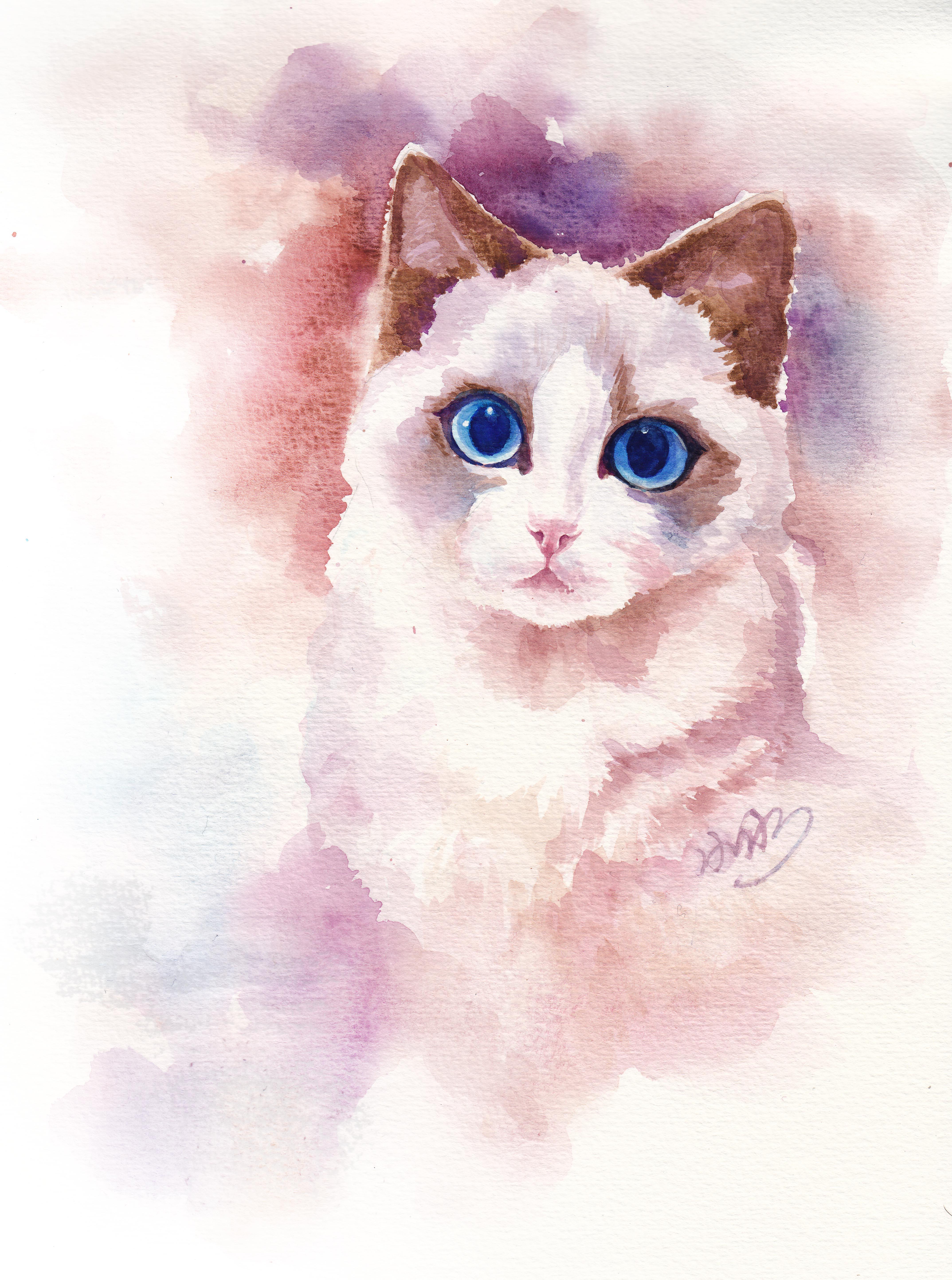 【一滴水小水手绘】水彩布偶猫