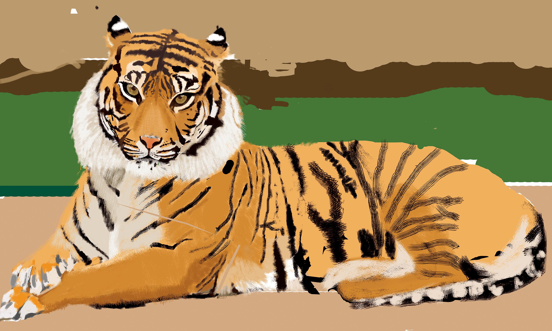 老虎手绘图