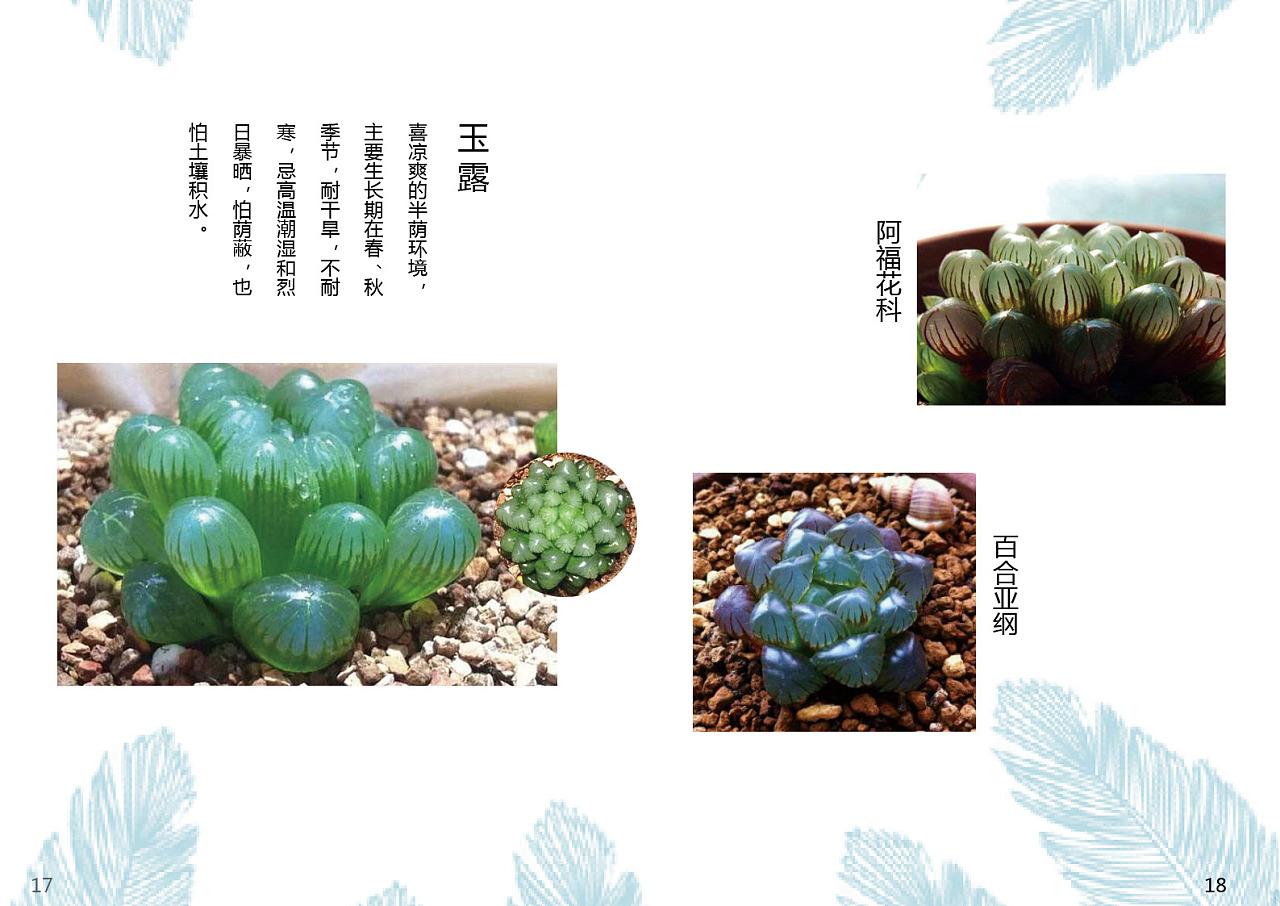 多肉植物画册