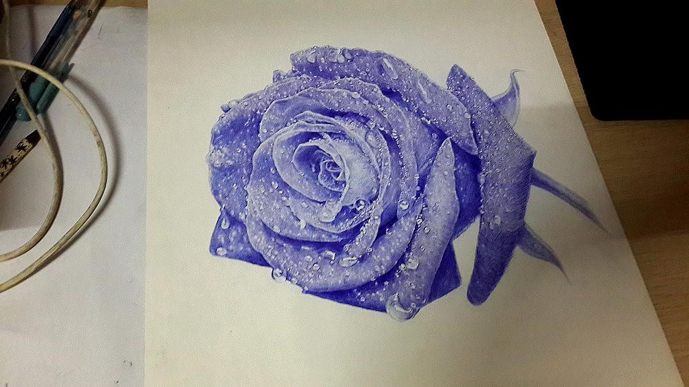 王f_圆珠笔手绘《蓝玫瑰》