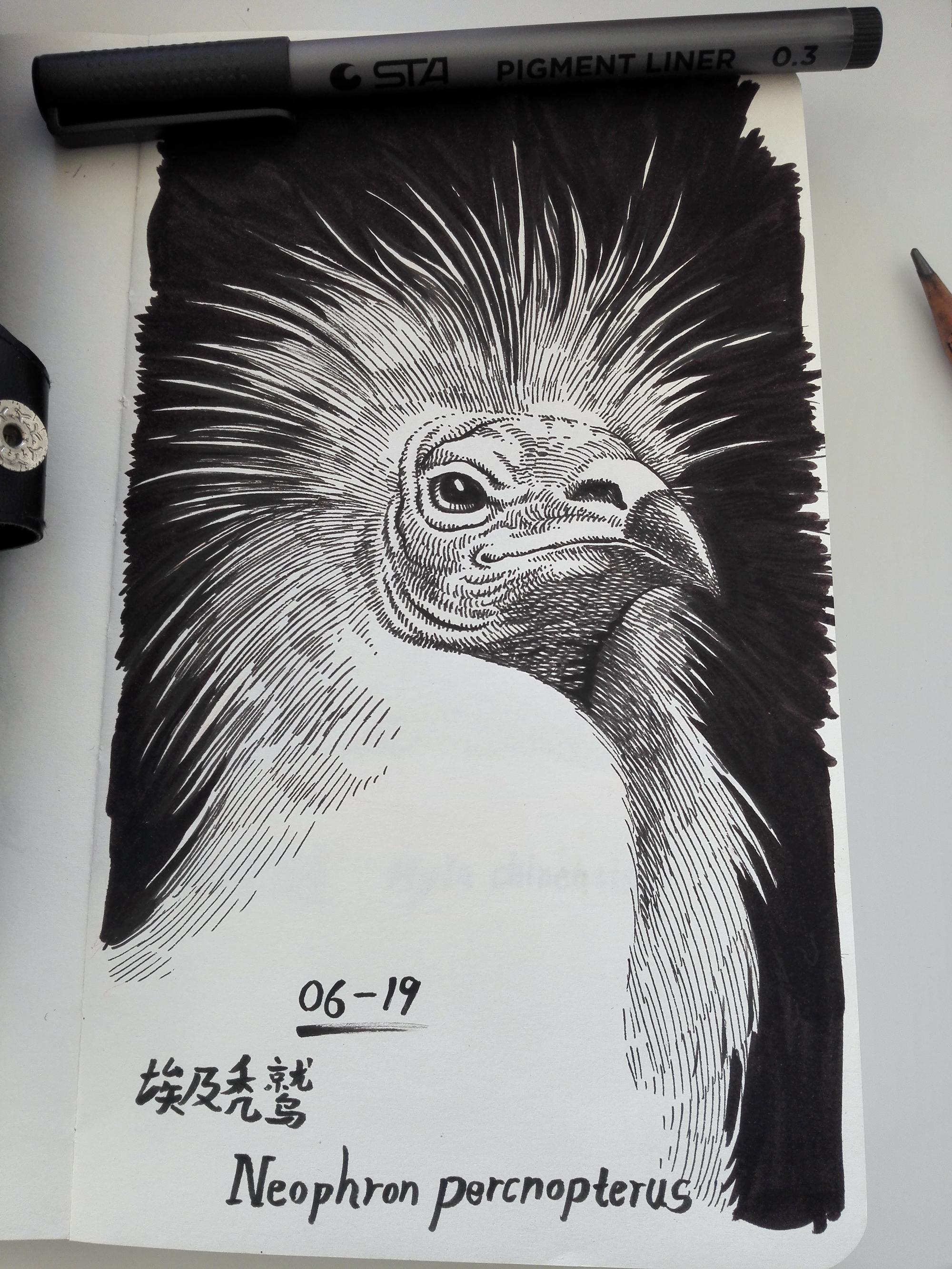 手绘动物小本本|纯艺术|钢笔画|机器人61号 - 原创