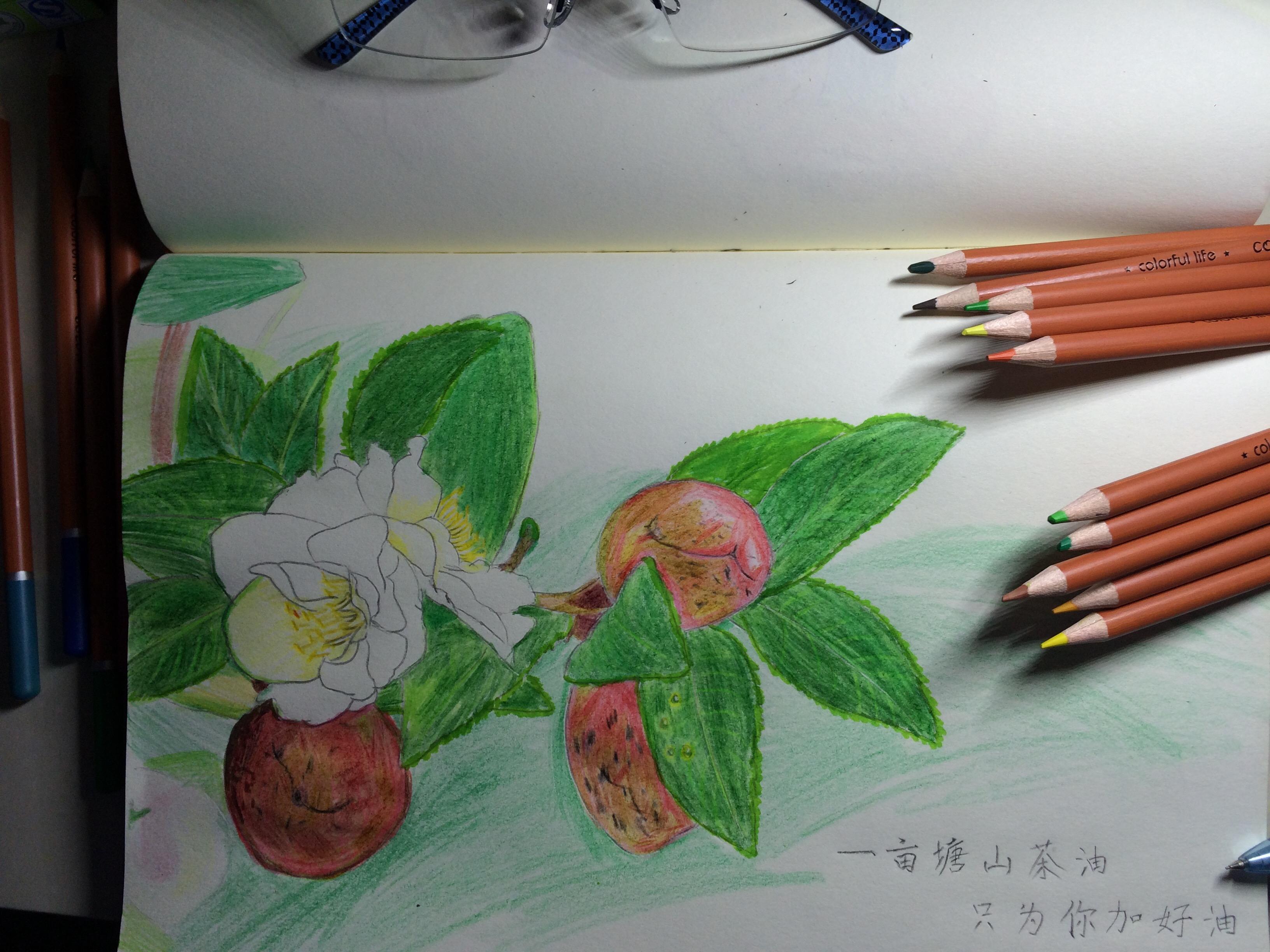 油性彩铅手绘山茶果