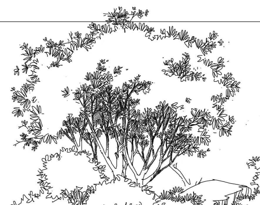 水体平面图手绘线稿