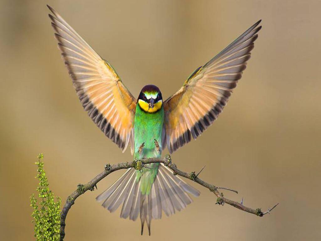 壁纸 动物 鸟 鸟类 雀 摄影 小鸟 桌面 1024_768