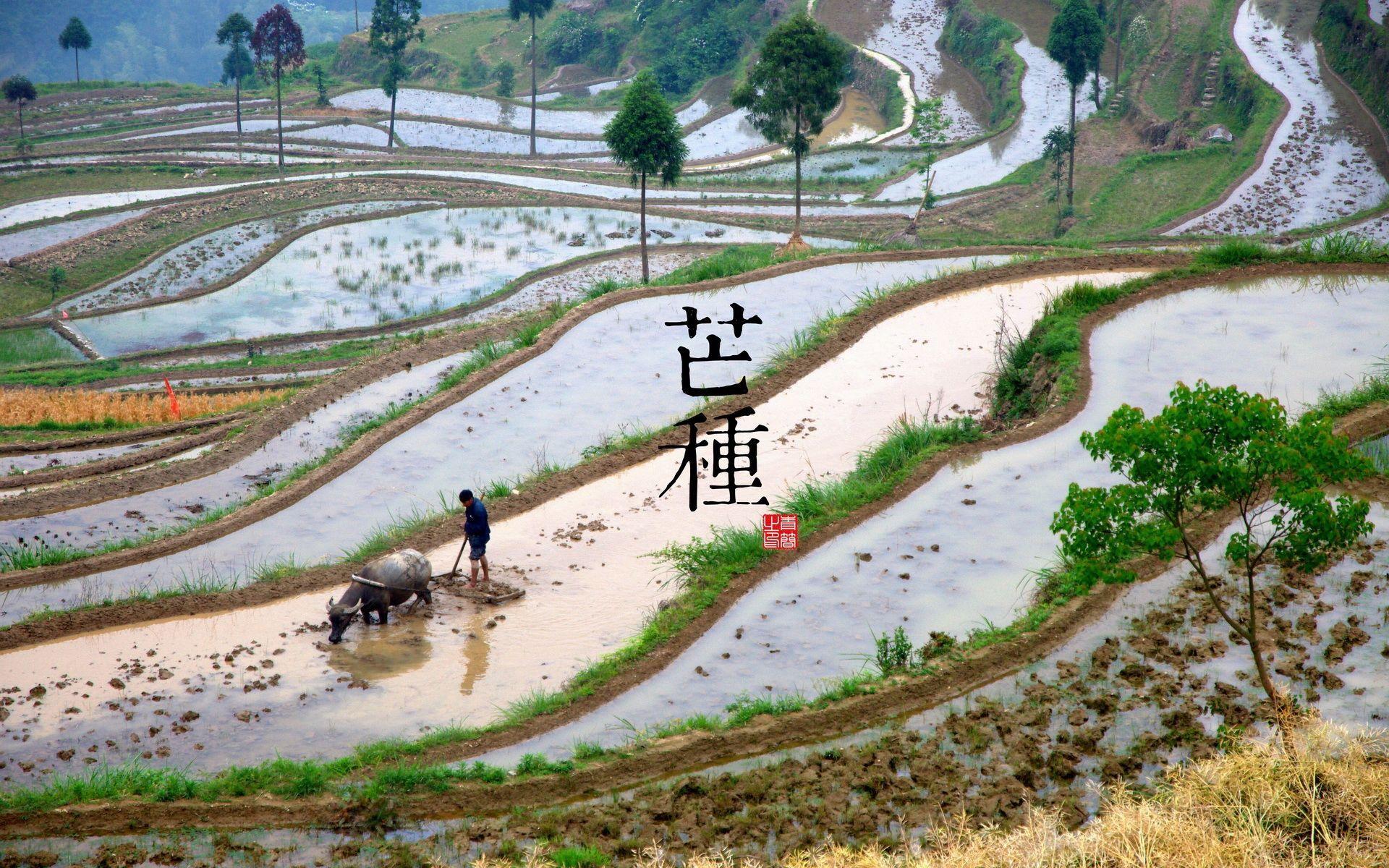 中国图案自然风景二十四节气海报风险古风设a图案模板四色图绘制壁纸图片