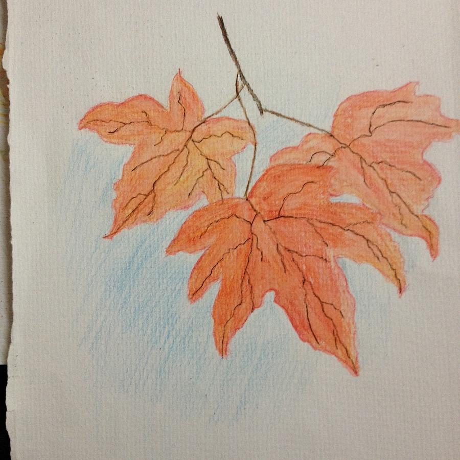 红枫马克笔手绘