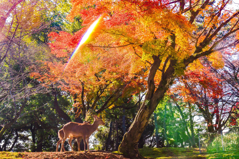 日本�z%�_游记-日本-奈良