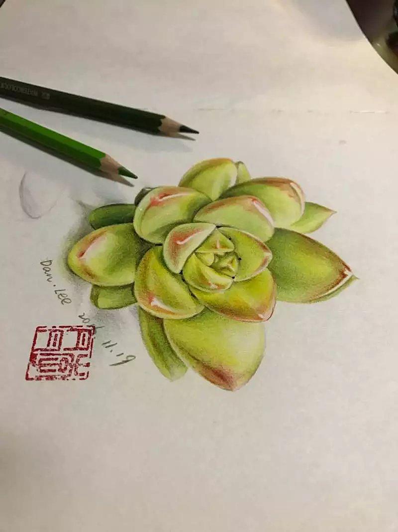 手绘多肉植物