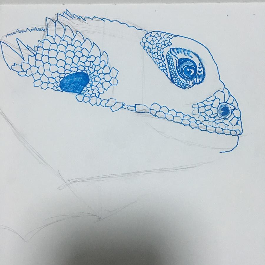 钢笔手绘——鬃狮蜥|其他插画|插画|大兔子阿呆