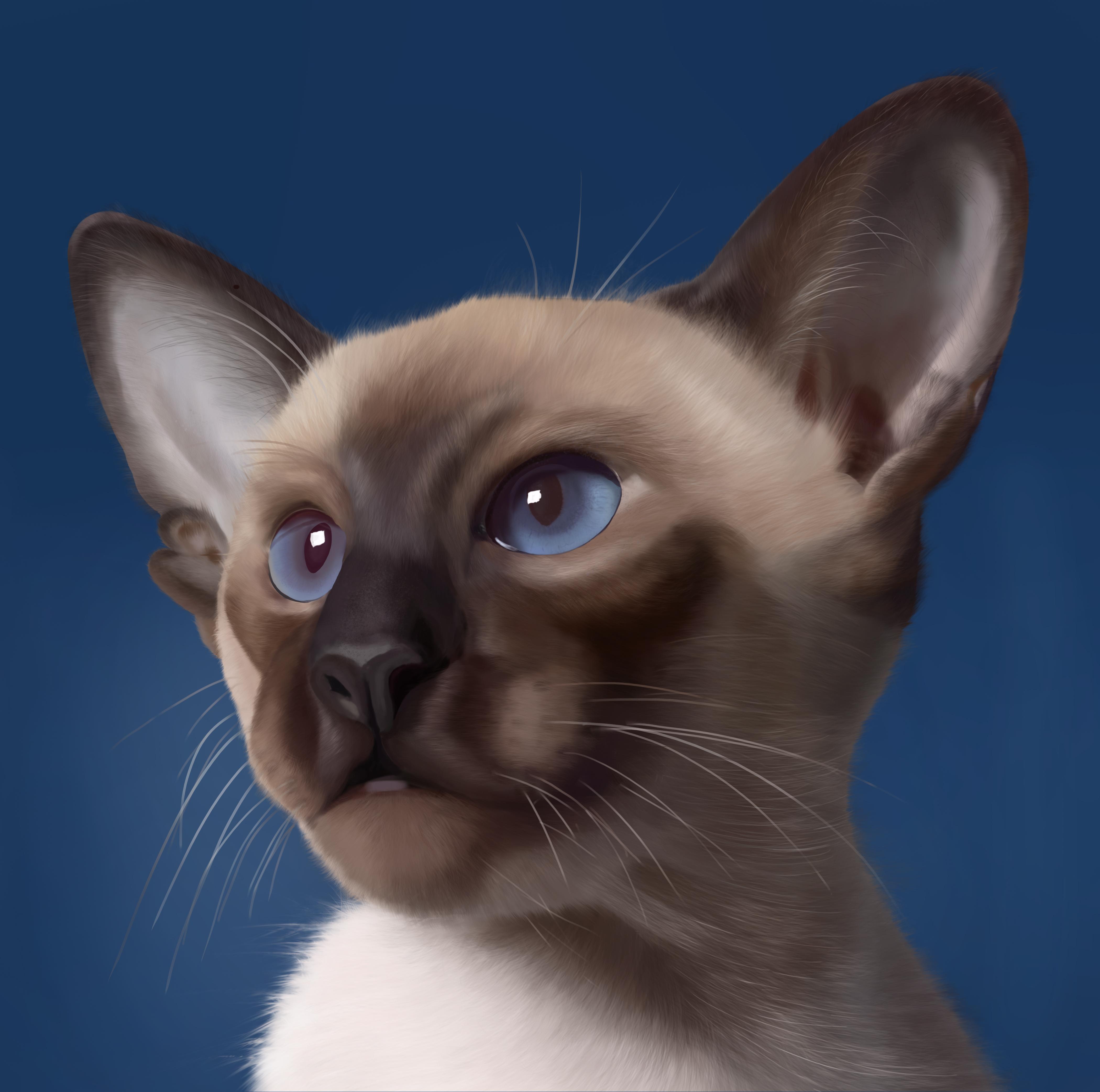 手绘动物耳朵图片