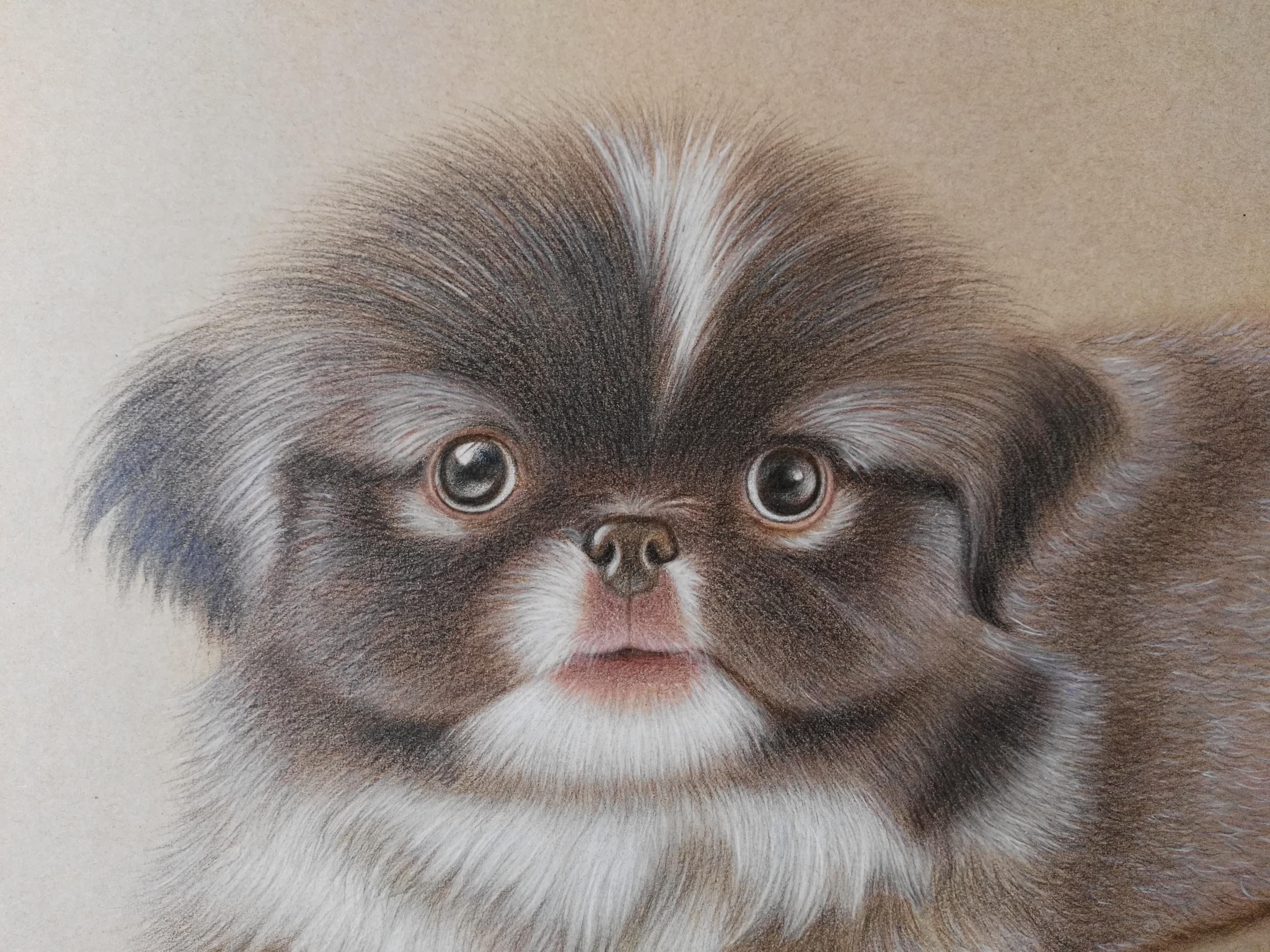 原创手绘彩铅狗