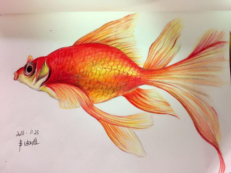 手绘 彩铅 金鱼