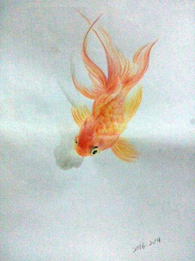 彩铅手绘|绘画习作|插画|田田1914