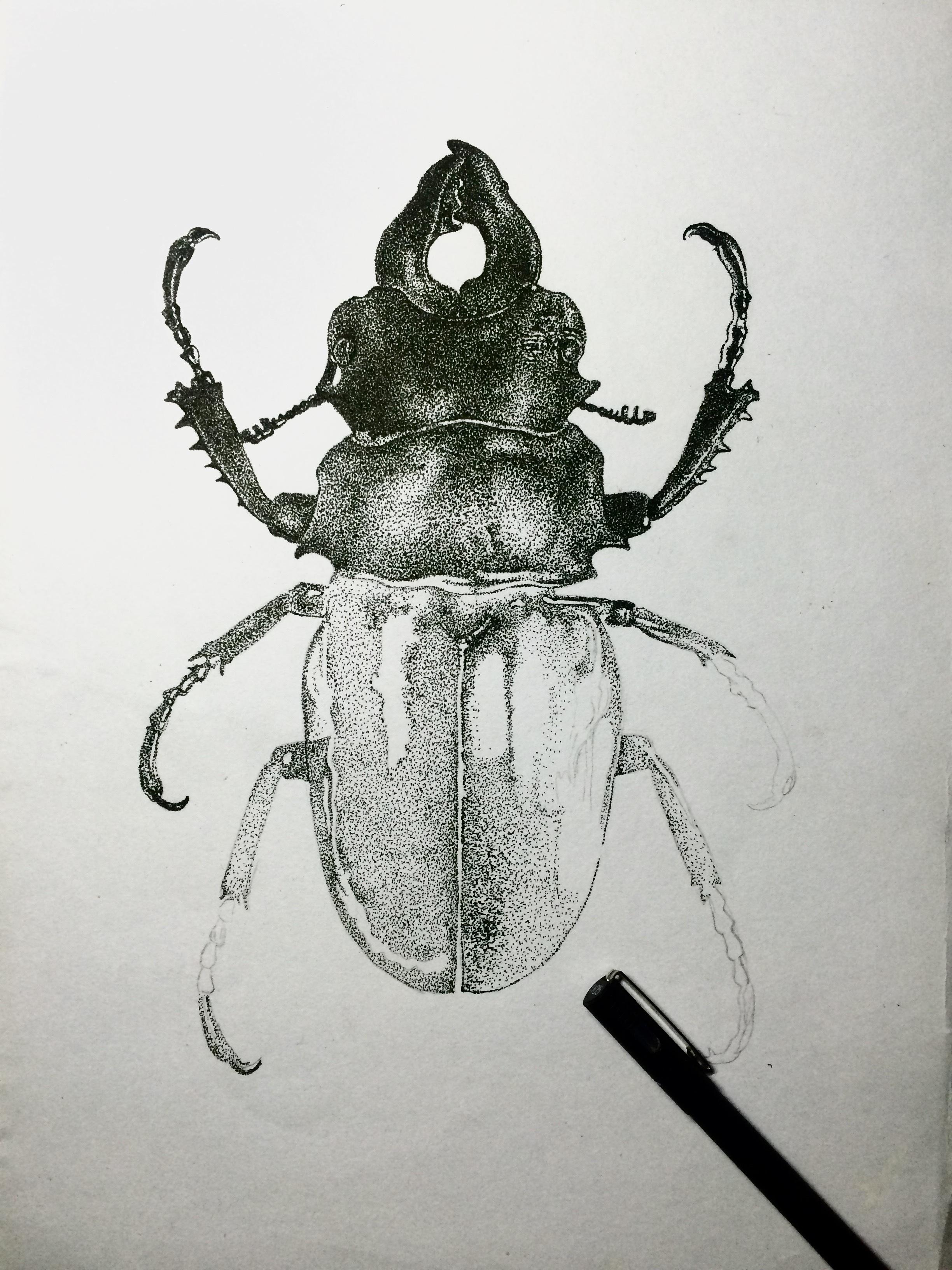 素描昆虫图片大全