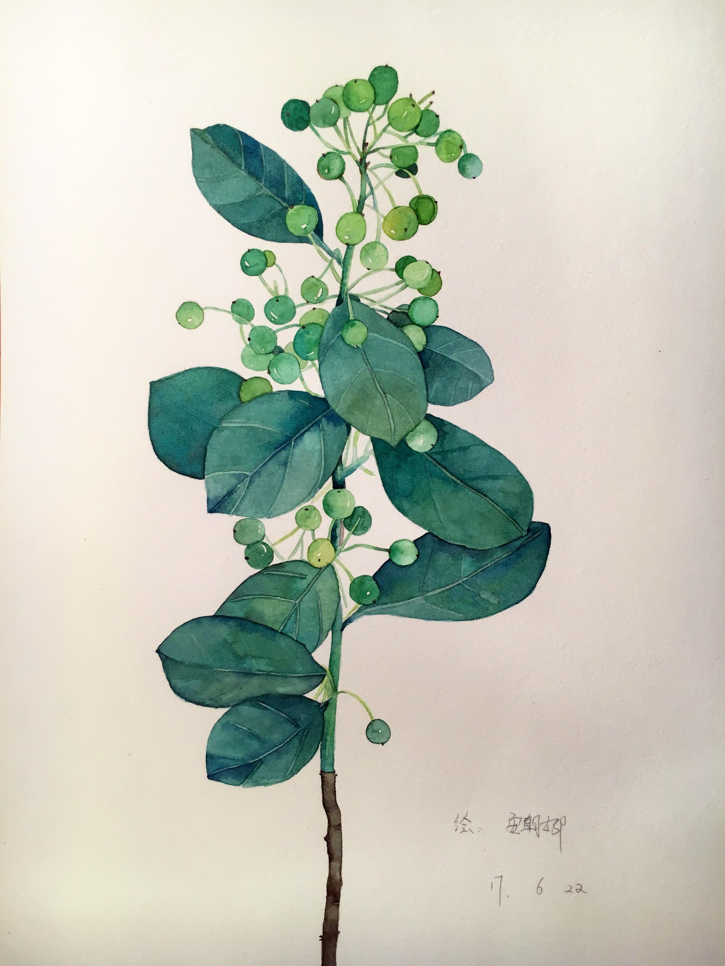 植物速写临摹图片大全