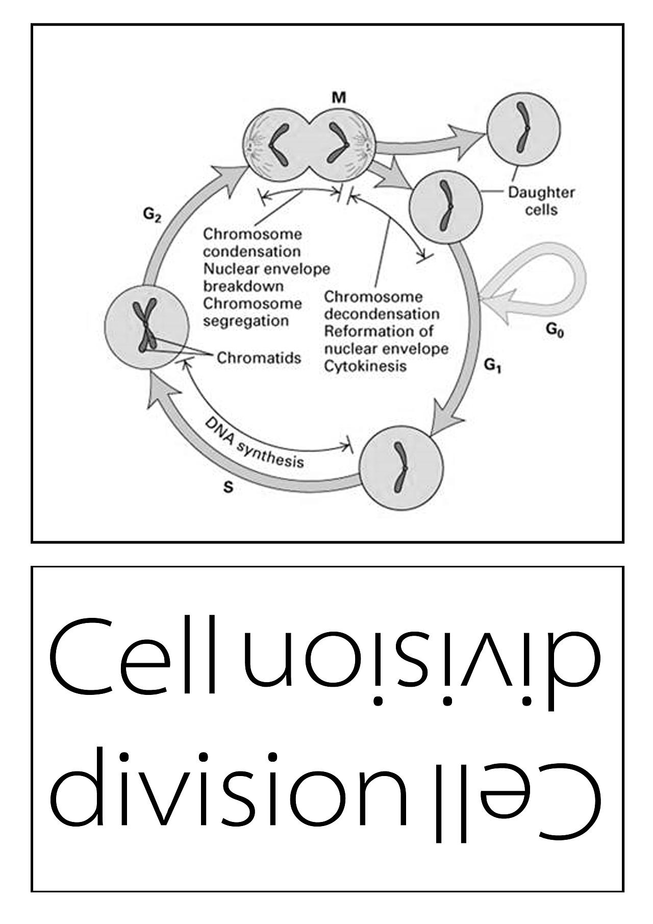 细胞平面图,显示所有细胞器_关于细胞研究的|平面|书装/画册|xww19931129 - 原创作品 - 站酷 (ZCOOL)