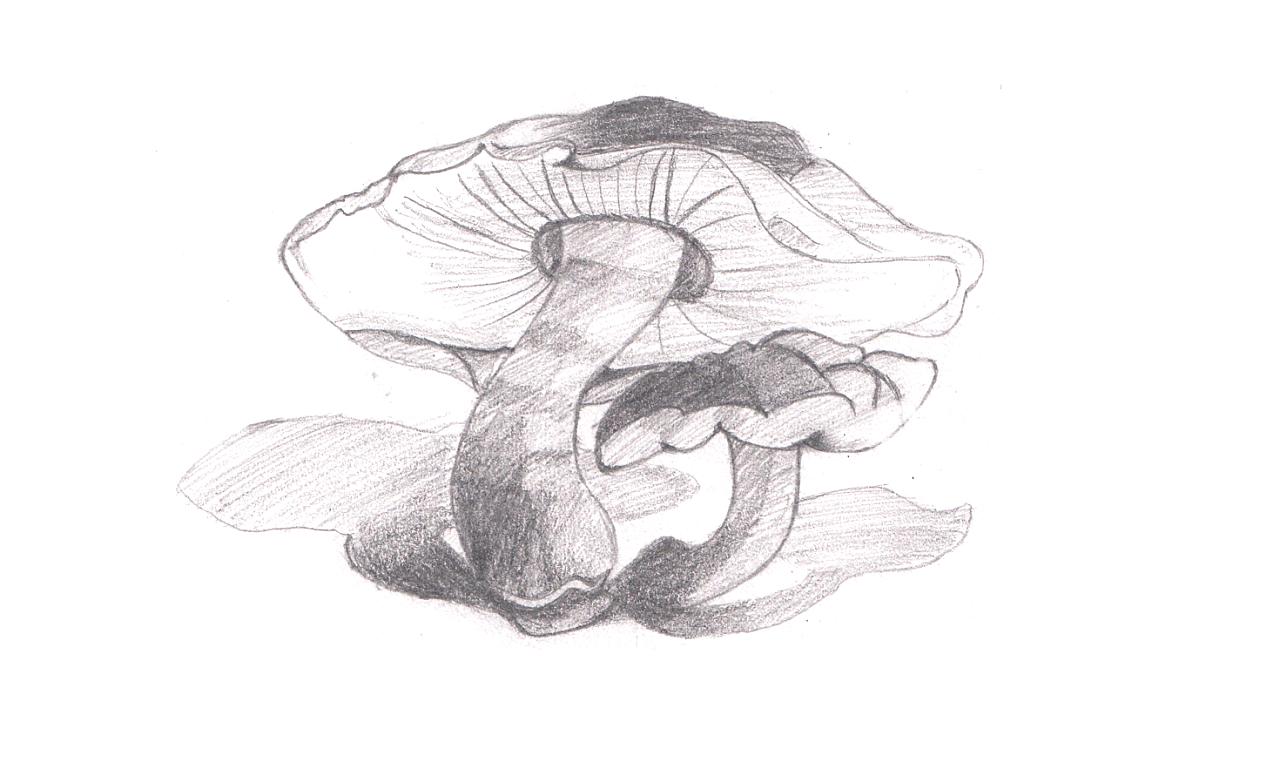 简笔画 手绘 素描 线稿 1280_782