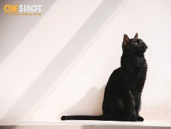黑猫Yuki【克查原创作品28】