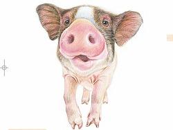 纯手绘彩铅动物萌绘植物人物纯手绘彩铅教程