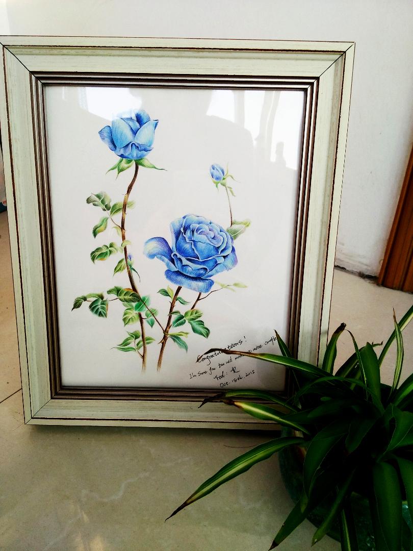 彩铅 蓝玫瑰|绘画习作|插画|蚊小盛-画画身边的人 绘画习作 插画 lu图片