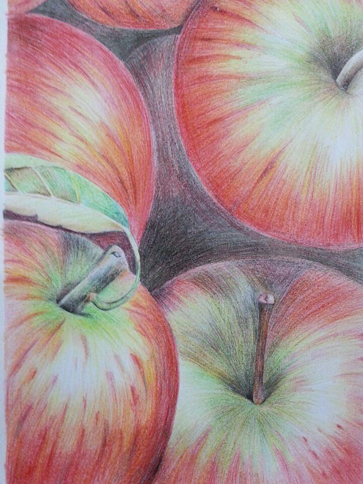 铅笔手绘|纯艺术|彩铅|叶子2830 - 原创作品 - 站酷
