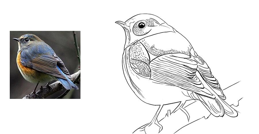 手绘板练习:鸟 图形/图案 平面 格紫视觉