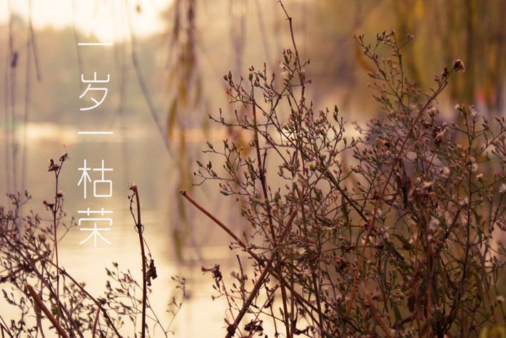 一岁一枯荣|生态|摄影|草色昭昭 - 原创设计作品