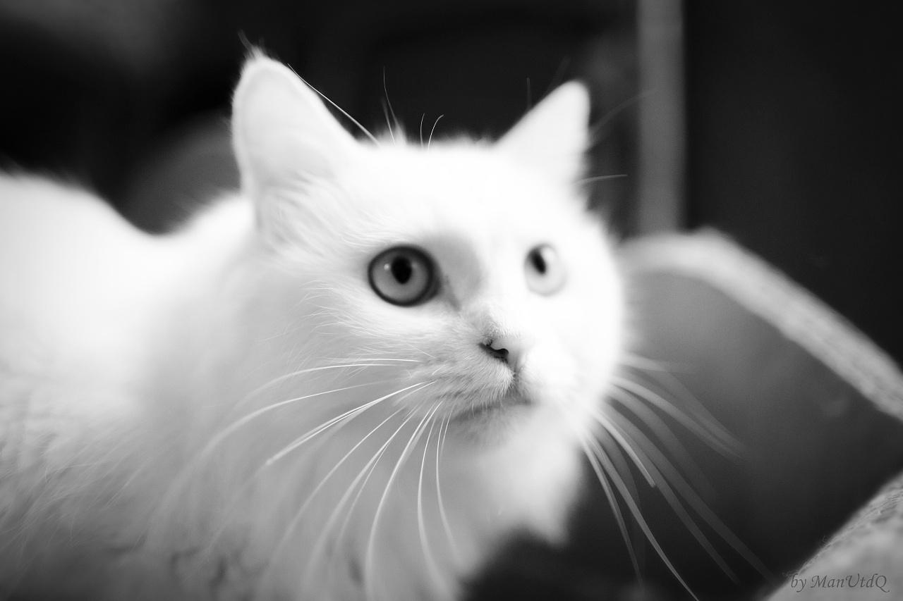 傲娇的小猫手绘
