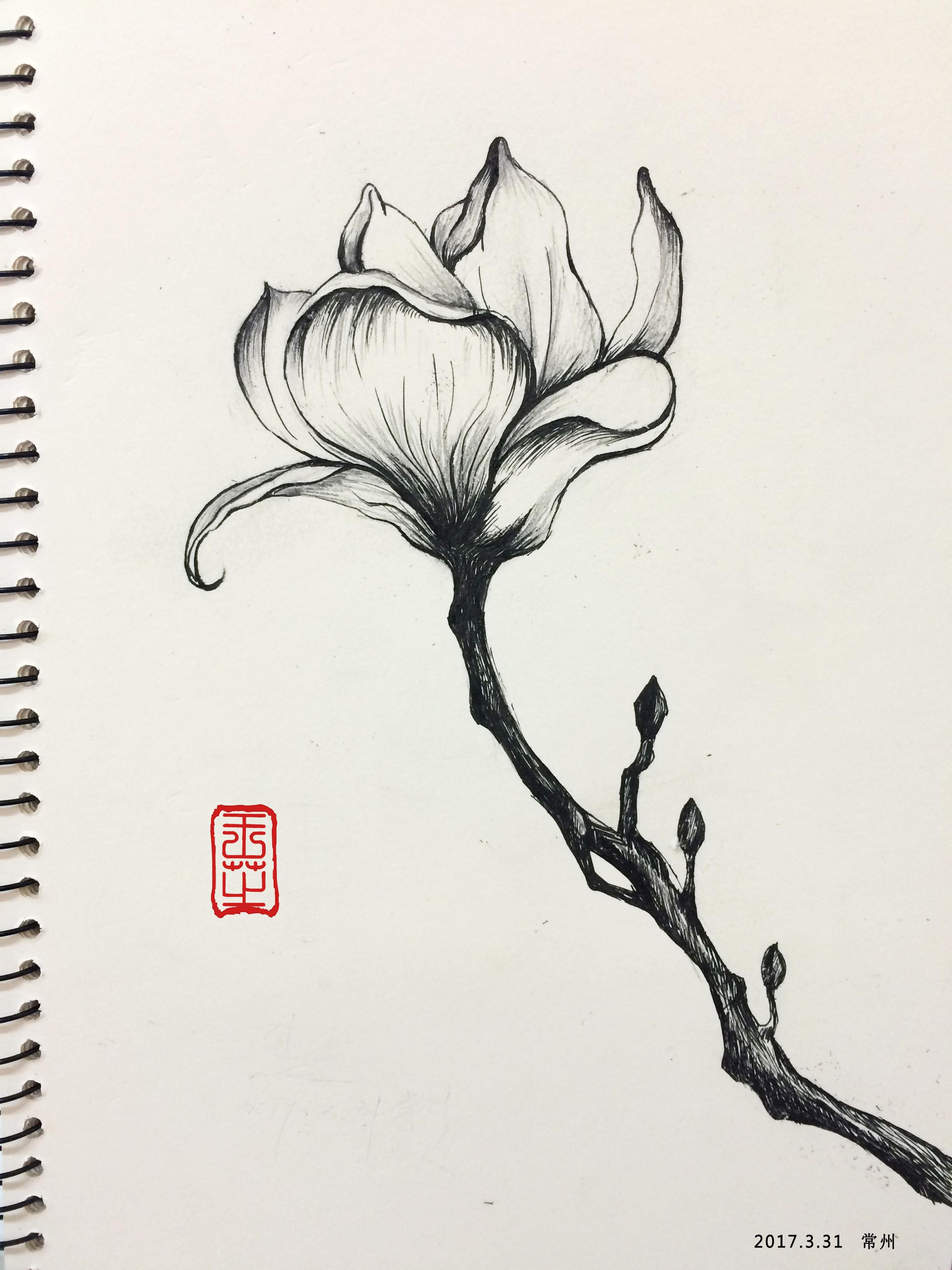 铅笔画-植物类